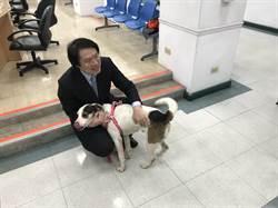消防署下「禁寵物令」 基市長認養「林吉米」盼隊犬有個家