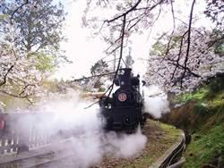 阿里山森鐵 7月回歸林務局營運