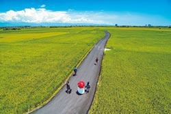 宜蘭版伯朗大道 推可食風景
