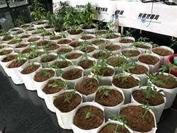 2毒蟲比特幣買大麻 租豪宅改造大麻工廠