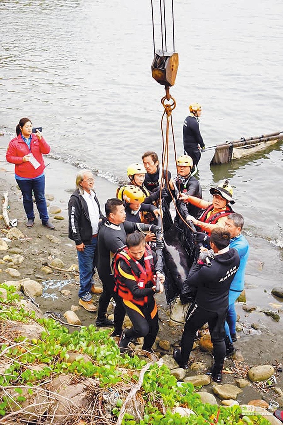 擱淺高雄港受困的3隻小虎鯨獲救卻宣告不治,而且都瘦成皮包骨。(成大海洋生物及鯨豚研究中心提供)