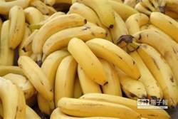 香蕉、芭蕉分不清! 議員怒轟吳音寧回去當作家