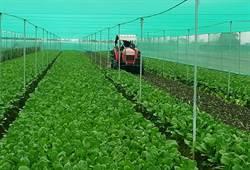 雲縣犁掉44公頃蔬菜  農委會主委陳保基指責遭嗆