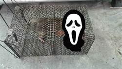 捕到老鼠生了一窩小老鼠 網友驚喊:我不會做月子