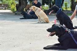 狗警察能緝毒 還能偵爆、反恐