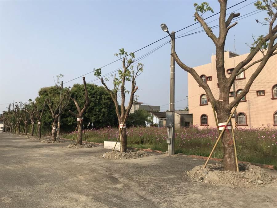重現後壁「下茄苳」地名,台北市北薪扶輪社及當地廟宇泰安宮攜手種下43棵茄苳樹。(莊曜聰攝)