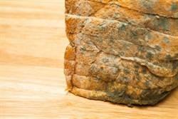 發霉麵包送育幼院 老闆竟嗆:不是很窮嗎還挑?