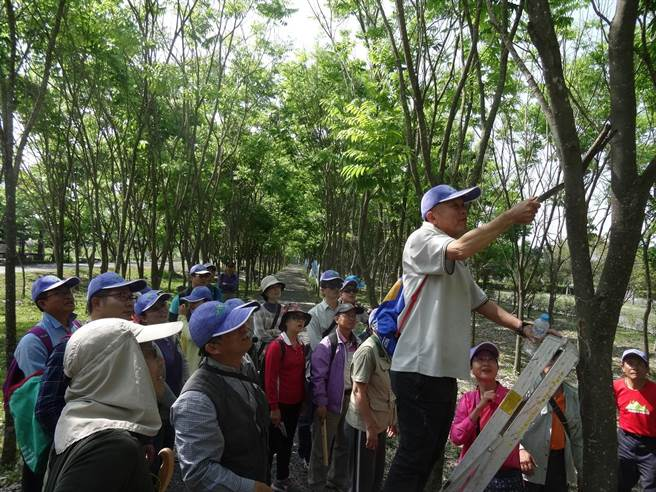 民眾實際操作修剪林木。(林和生翻攝)