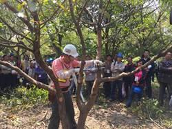 高雄巿今年度第1期樹木修剪訓練班30人合格