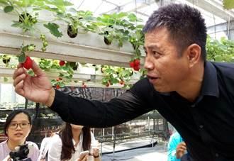 吉里巴斯官員台灣取經 參觀光電農棚
