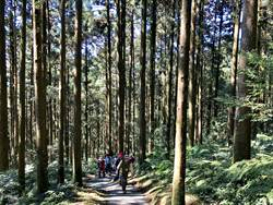 連假好康 12歲兒童免費暢遊森林遊樂區