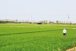 公糧收購續辦 稻米銷往大陸