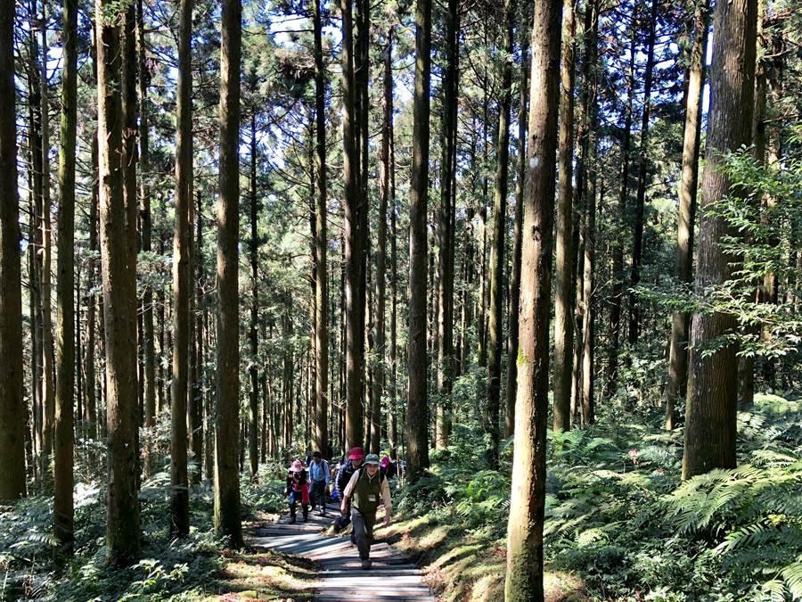 歡慶兒童節,4月4日起連假期間,12歲以下兒童可免費進入14處國家森林遊樂區。圖為東眼山國家森林遊樂區(林務局提供)