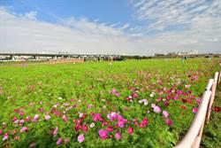 花農商機!台中花博植栽採用台灣在地花卉
