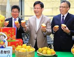 促銷茂谷柑 中市補助收購外銷每公斤5元