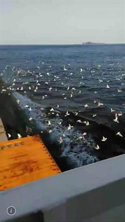 和平希望之鴿放飛釣魚台附近海域