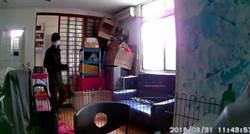 女研究生裝攝影機觀察小狗 拍到這幕讓她嚇傻