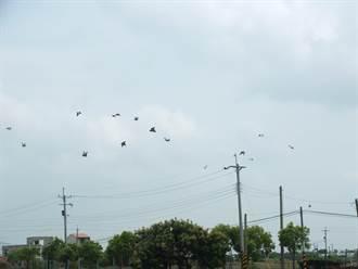 賽鴿會長遭擄付500萬獲釋 警逮6嫌送辦