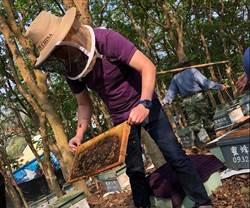 氣候適宜蜂蜜豐收 價格比去年便宜1成