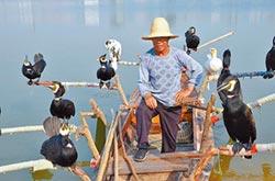 鸕鶿捕魚技藝 陸老漁翁嘆將失傳