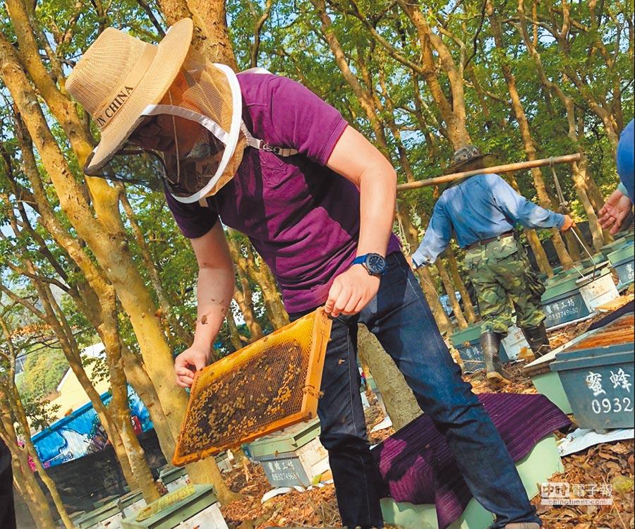 今年氣候適宜,蜂蜜大豐收產地每公斤價格約300至400元左 右。(許素惠攝)
