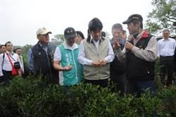 賴揆參訪日新茶園 允研議加碼補助復耕