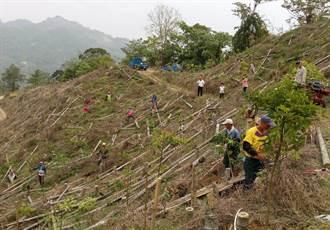 白冷圳協會發動造林 10天種萬棵苗木