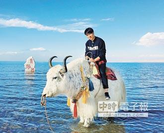 青海湖解凍 喜迎鳥類、遊客