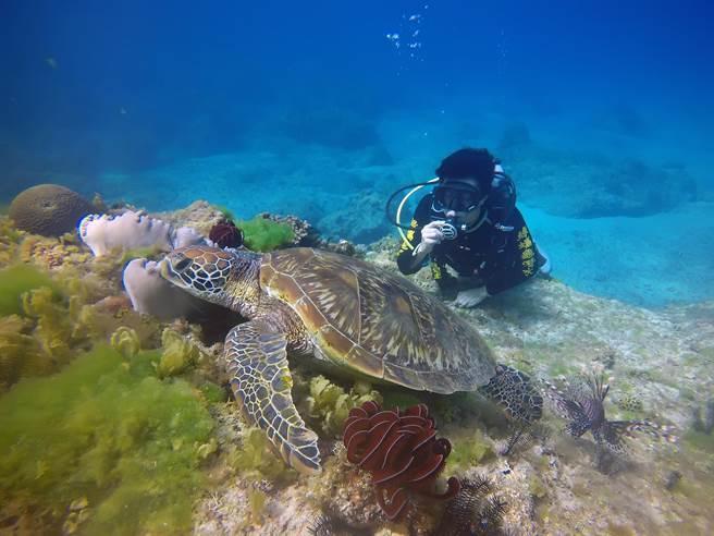 想要潛水的遊客,即使沒有潛水執照,也會有專業的教練帶領你,與綠蠵龜親近,但不能接觸。(陳麒全攝)