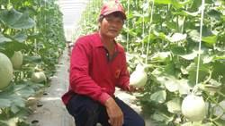 見識「夏天的洋香瓜」 菲律賓議員參觀瓜農溫室栽培法