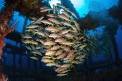 台灣能潛水? 台灣海洋超美讓國外潛水客驚呆了!