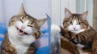 拍完了沒阿?IG人氣貓王千變萬化的呆萌表情,絕對可以榮登網紅No.1啦!