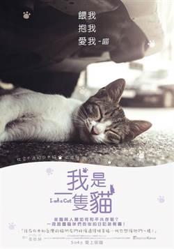 《我是一隻貓》訪猴硐貓村 韓愛貓族超羨慕