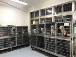 婦人繁殖瑪爾濟斯犬販售 開罰10萬元