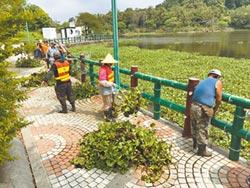 布袋蓮為患 青草湖2個月清300噸