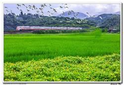台灣之美》新北貢寮田寮洋濕地 賞鳥、鐵道迷最愛