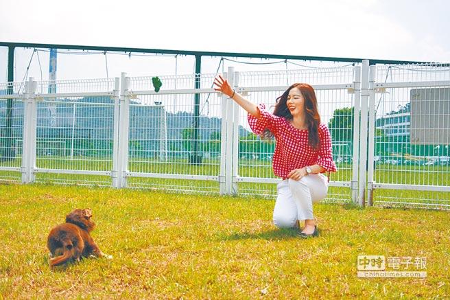 台北市設置5處專屬寵物犬運動空間,讓飼主可以跟愛犬一起在戶外玩耍。(北市動保處提供)