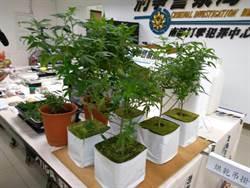 比特幣買種子 揪2同學種大麻結果GG
