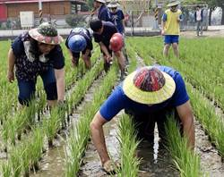 挲田草與堆積木 城市、鄉下孩子不同的學習