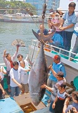 東港第一鮪傳捷 漁會今驗魚