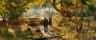土耳其名導挑戰第2座金棕櫚 《野梨樹》入選坎城競賽片