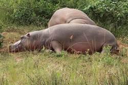 犀牛不買蔡英文帳 合照時一隻隻跑光光