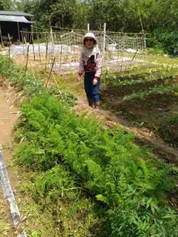 有機農業正夯 新北3農民獲國際認證