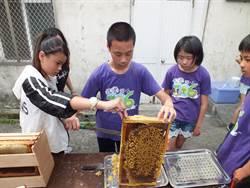 彰化花壇文祥國小養蜂 為明年畢業修業旅行籌經費