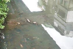 西定河飄惡臭 淤泥、垃圾惹禍