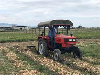 恆春鎮農會測試成功 機械化採收洋蔥不再是夢