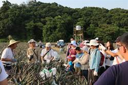 一日農夫亮眼 高雄龍目社區奪金牌農村銅獎