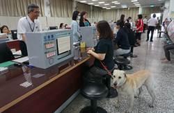 政府機關歡迎毛小孩  大雅區公所獲寵物友善認證