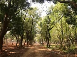 體驗與樹對話!花博森林園區保留千棵老樹
