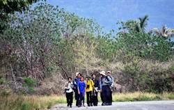 知本溼地環頸雉大調查 2小時記錄80多隻次